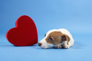 3 Ways a Dog Can Help with Depression